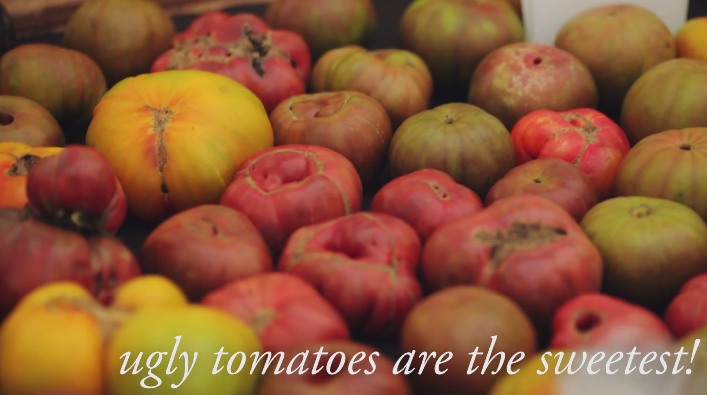 It's the Inside that Counts – Ugly Tomatoes